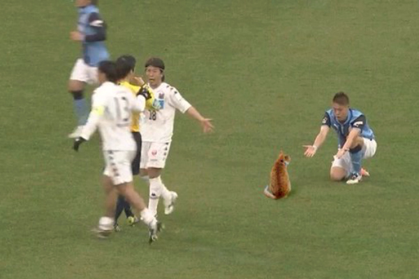 cat appears on the pitch