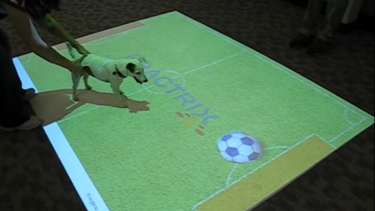 Interactive Floor Display   Dog Plays Virtual Soccer