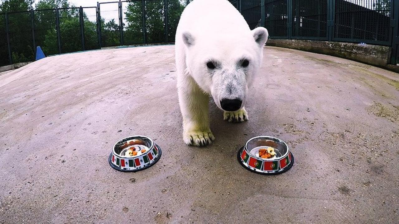 Nika the bear