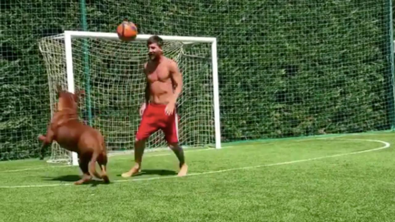 lionel messi dog  a giant mastiff  filmed playing soccer with master
