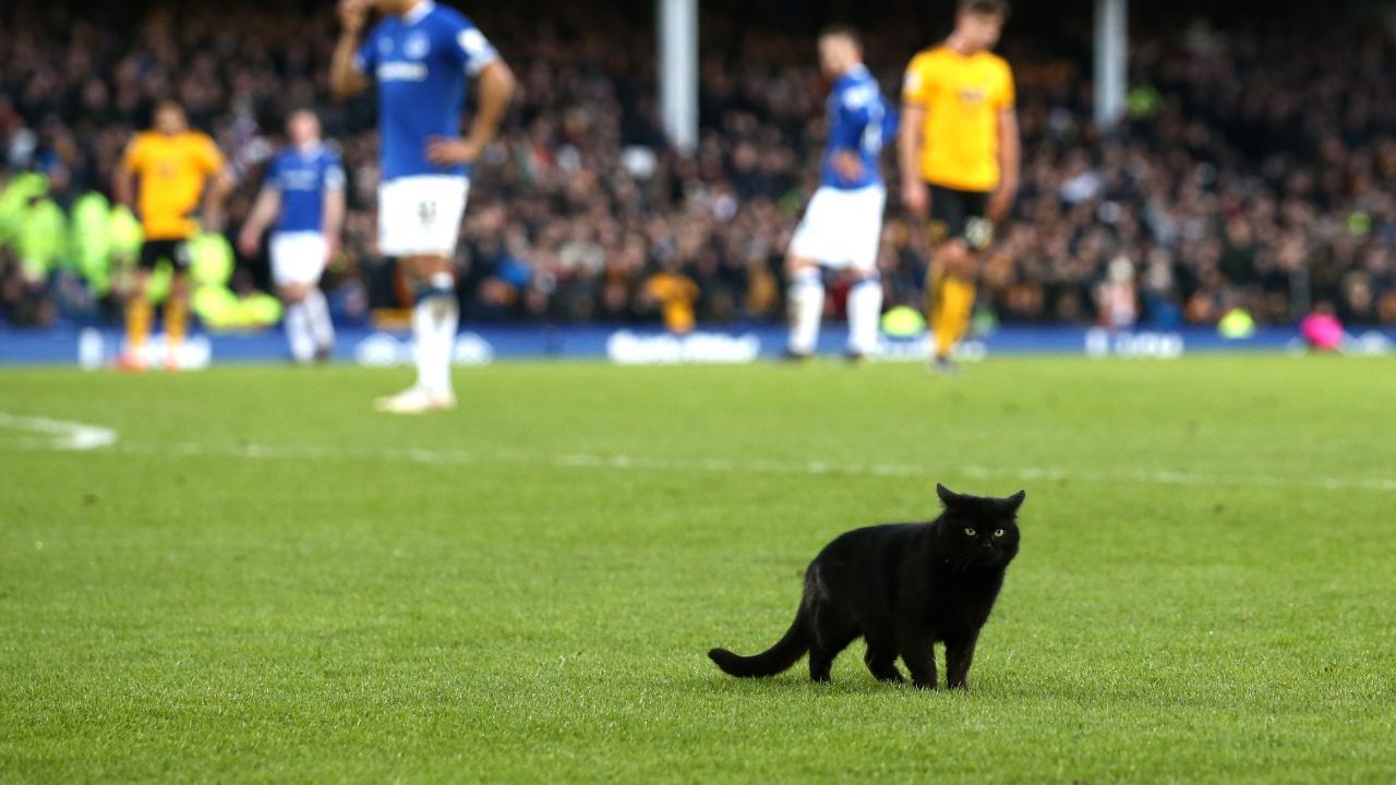 Everton Cat