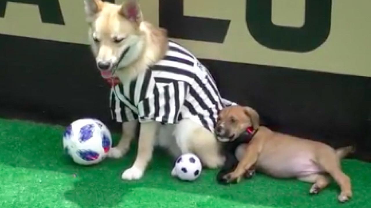 World Pup