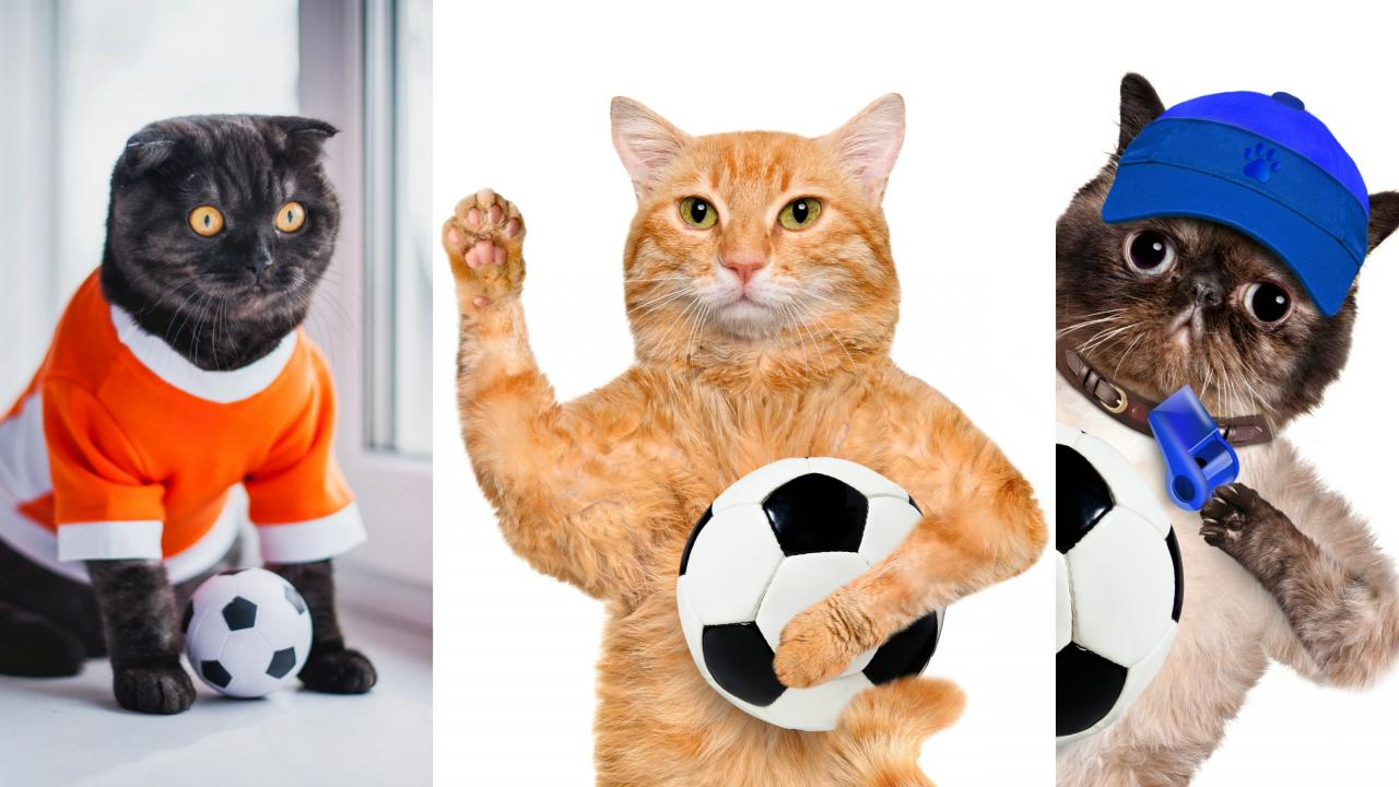 Soccer Cat Photos