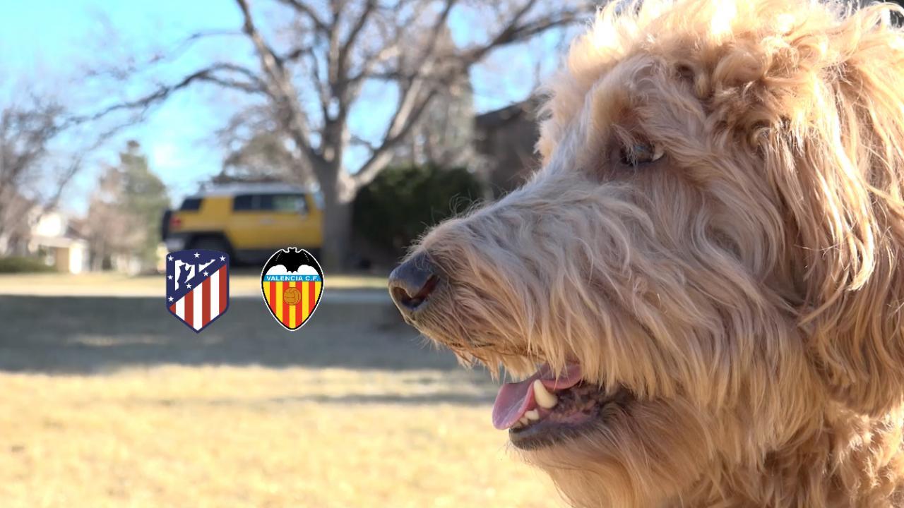 Chewie The Match Predicting Dog Atletico Madrid vs Valencia