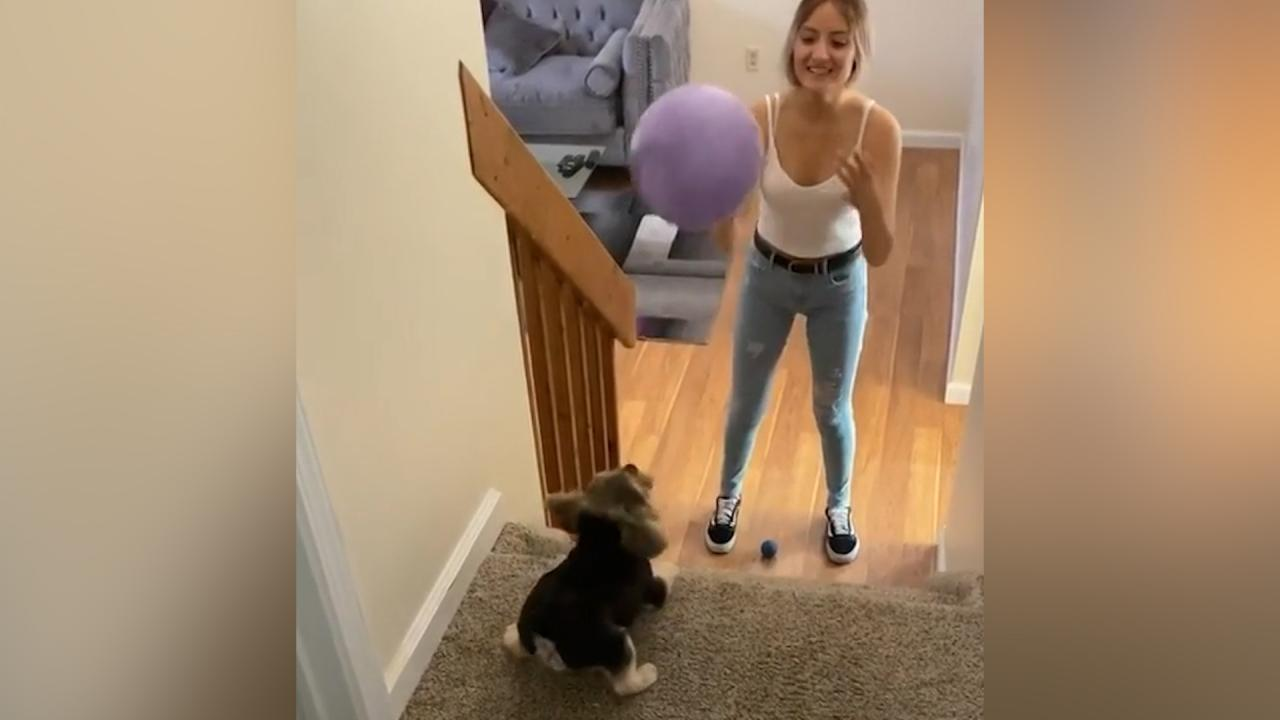 Woman passes ball to dog