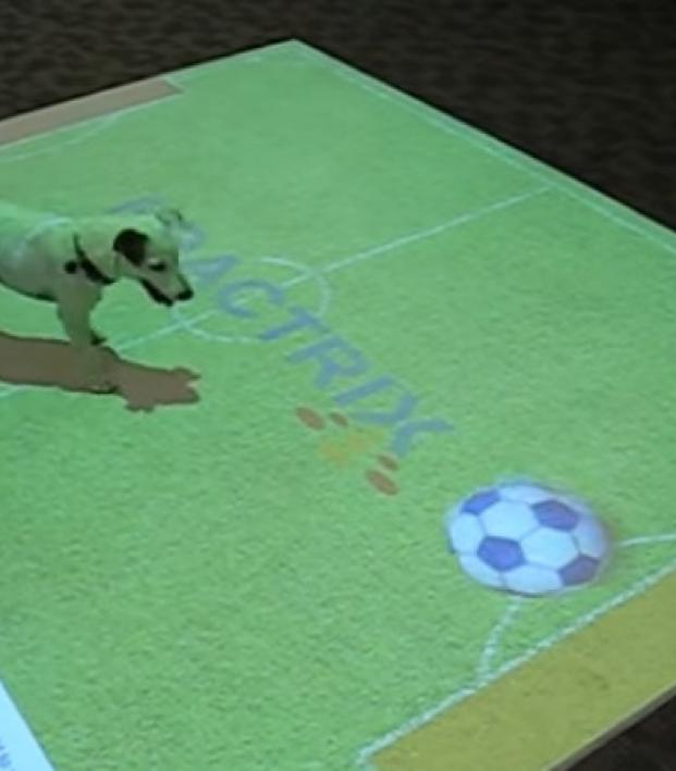 Interactive Floor Display - Dog Plays Virtual Soccer