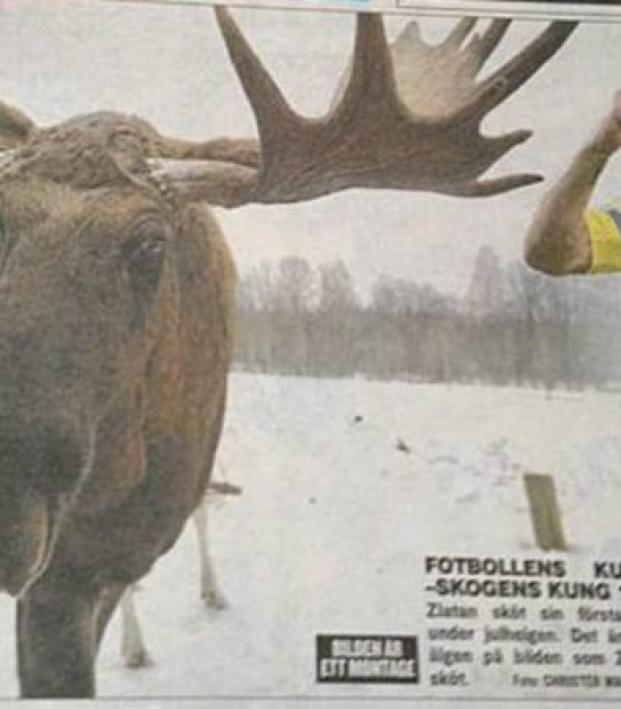 moose newspaper article