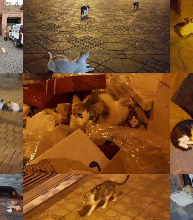 Cats of Marrakech