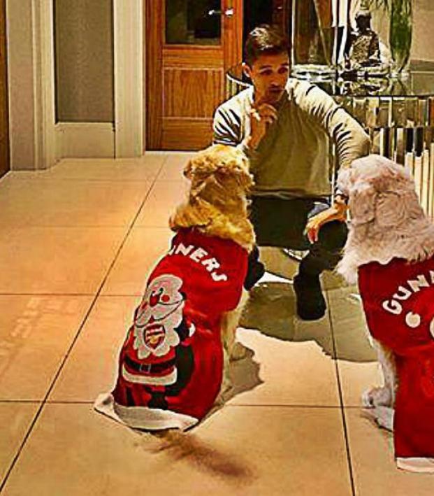 Alexis Sanchez dogs Christmas