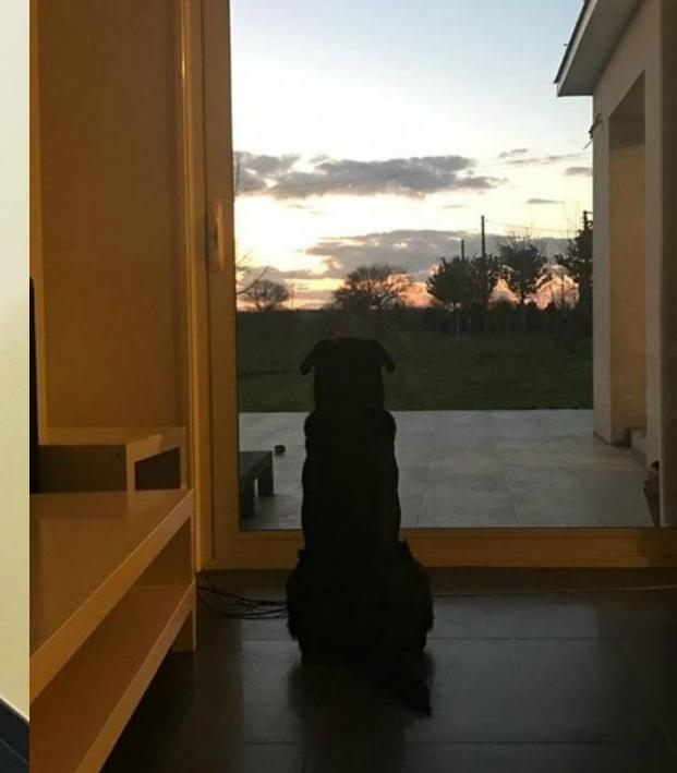 Emiliano Sala Dog