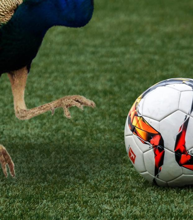 Peacock Soccer Offerings