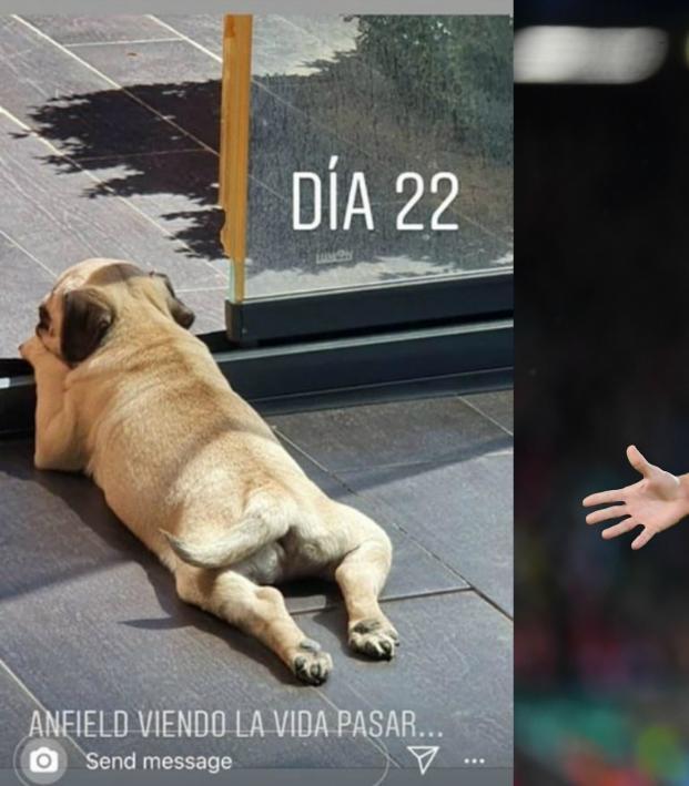 Marcos Llorente Dog Anfield