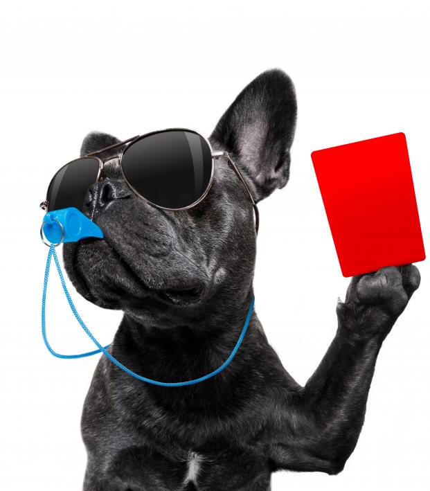 Soccer Dog Shown Red Card
