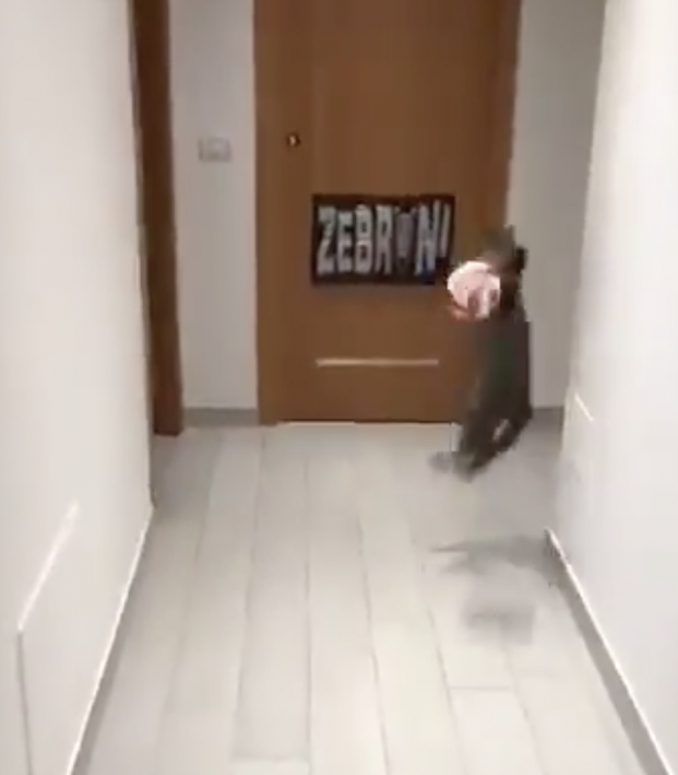 cat playing goalkeeper