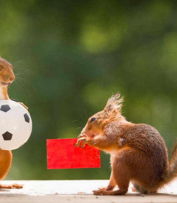 Animals predicting World Cup