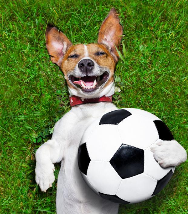 soccer dog