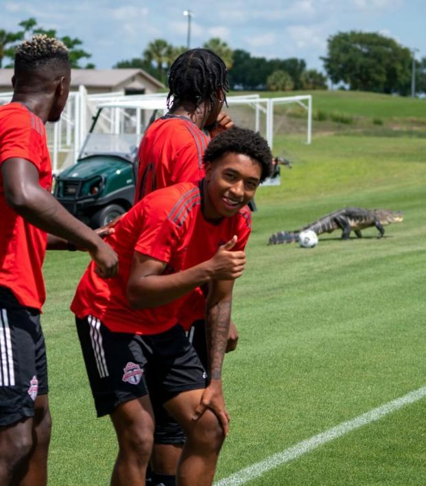 Alligator invades training pitch