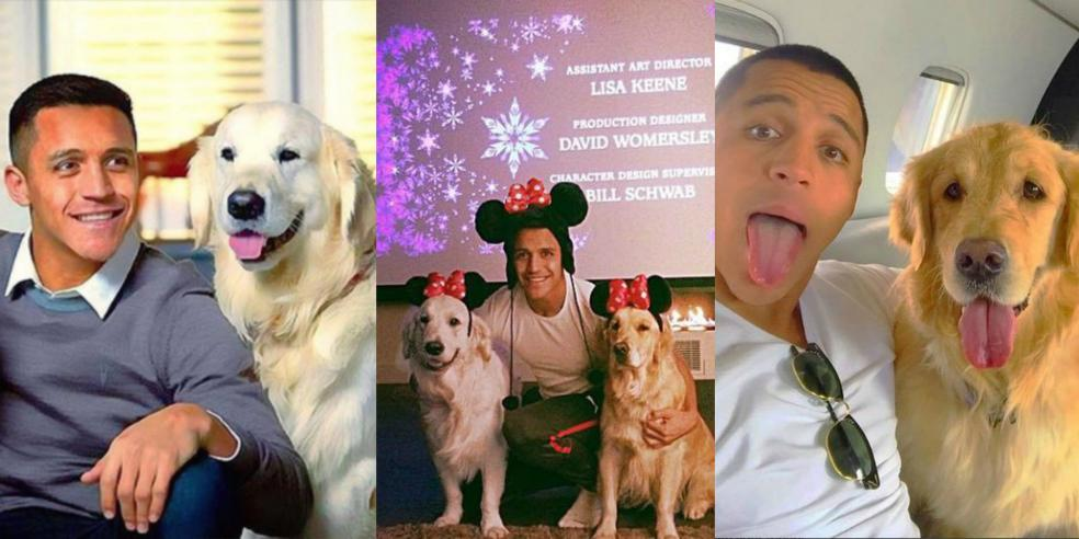 Alexis Sanchez Golden Retrievers