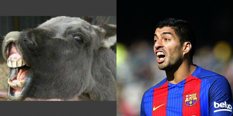Luis Suarez's animal look alike: a donkey