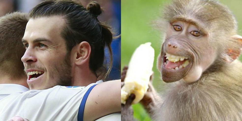 Gareth Bale's animal look alike: a monkey