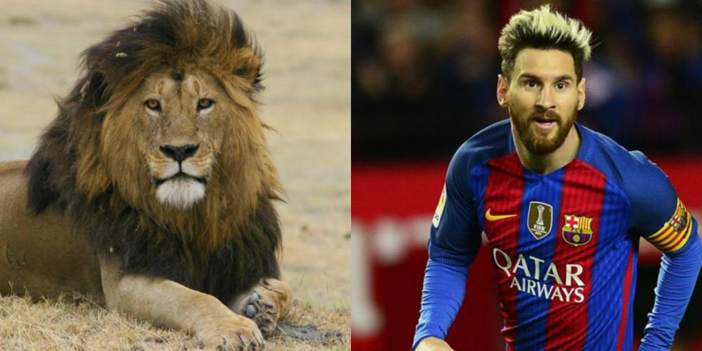 Lionel Messi's animal look alike: a lion