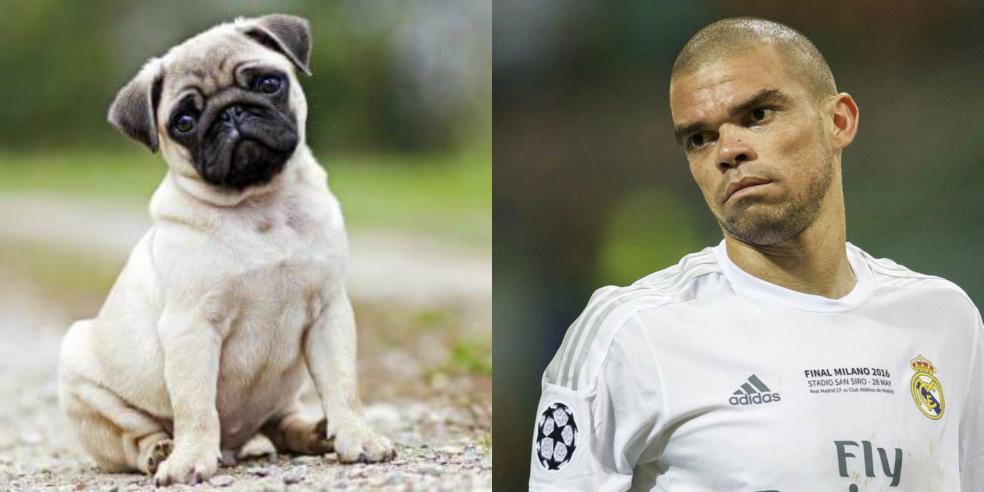 Pepe's animal look alike: a pug