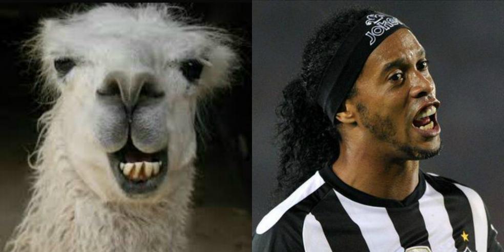 Ronaldinho's animal look alike: a llama