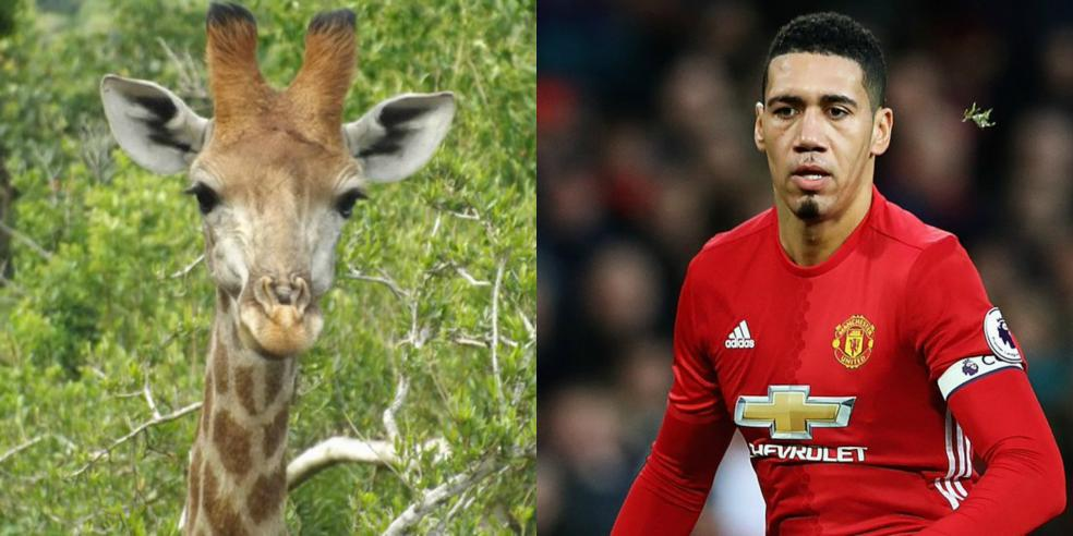 Chris Smalling's animal look alike: a giraffe
