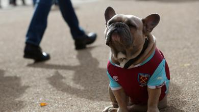 West Ham Dog