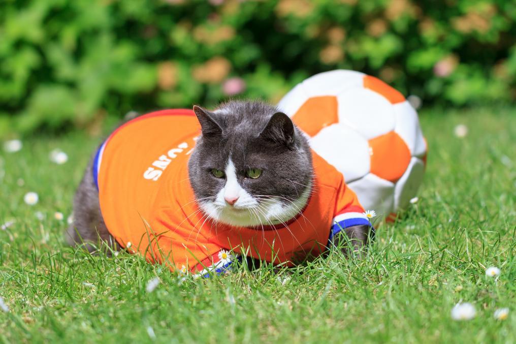 Soccer Cat Dutch