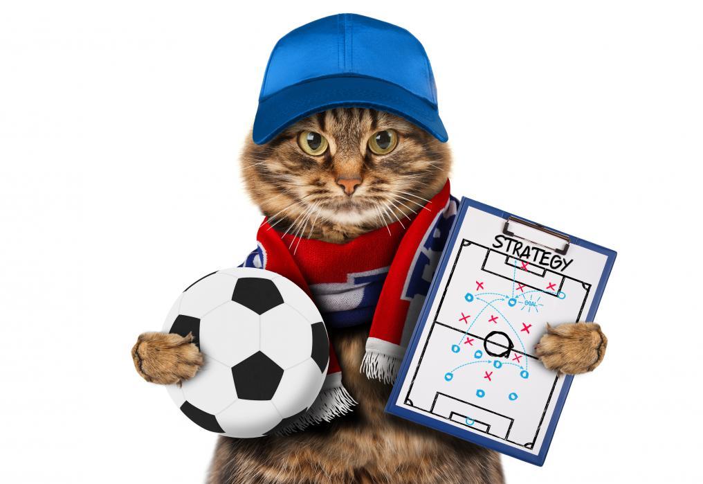 Soccer Cat Coach