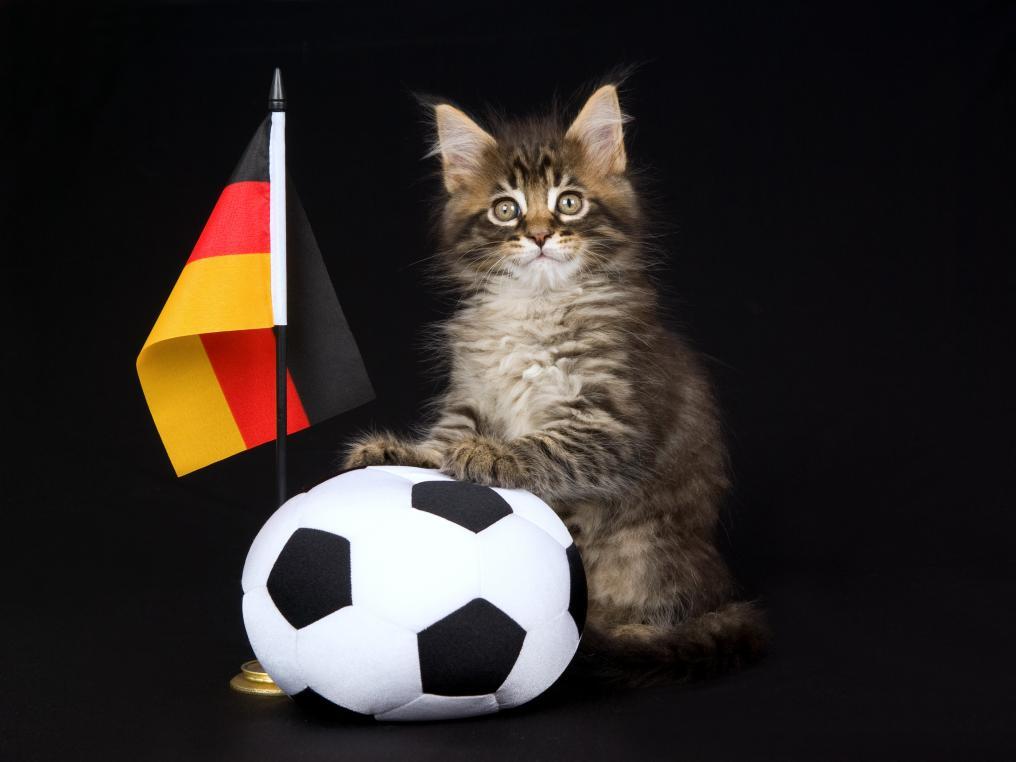 German Soccer Cat