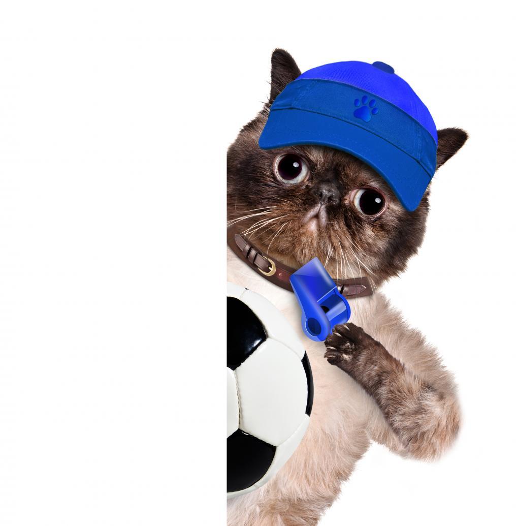 Soccer Cat Ref
