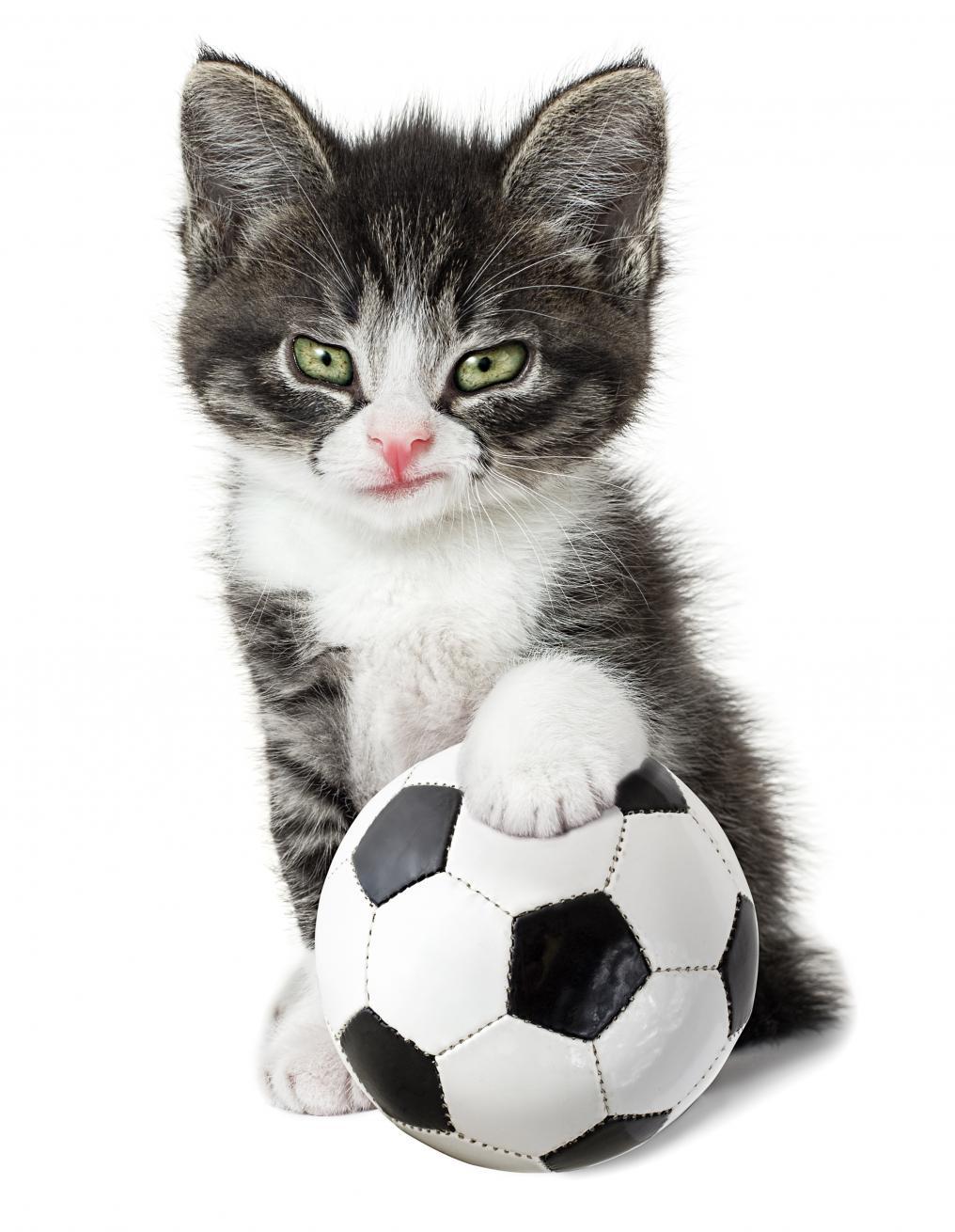 Soccer Cat Pulisic
