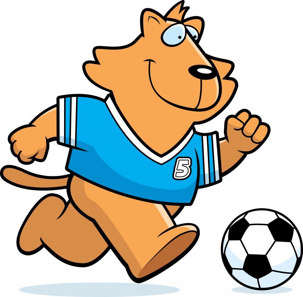 Soccer Cat