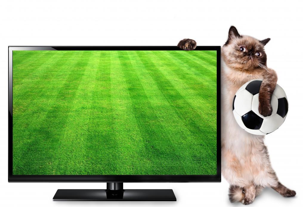 Soccer Cat TV
