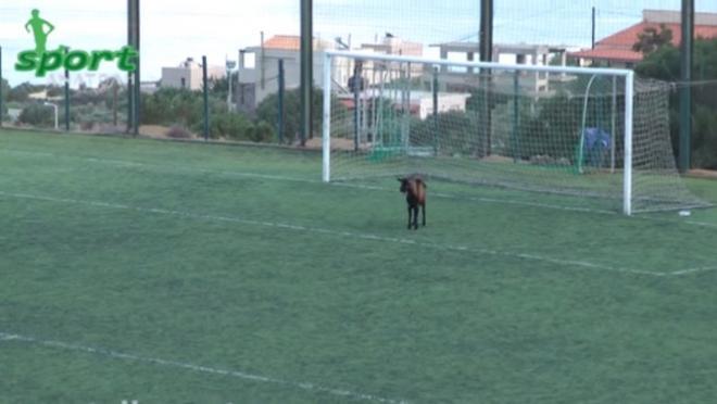 A Goat in Goal