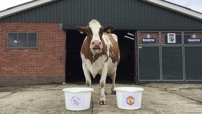 Dutch cow Wkoe Sijtje predicts Ajax to win Europa League