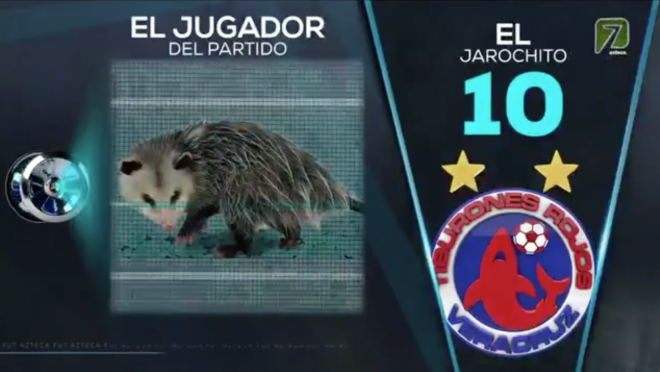 Liga MX Possum
