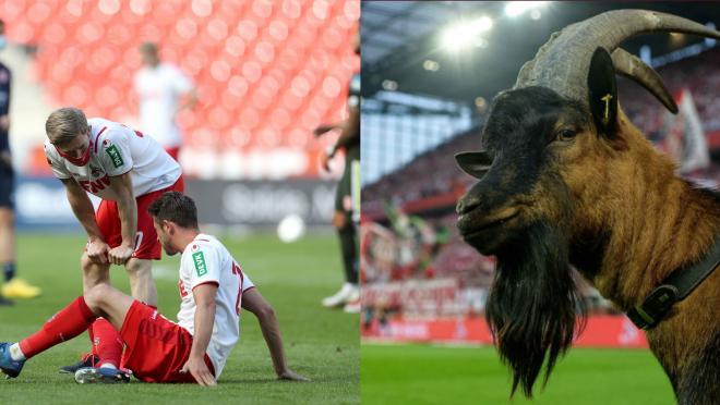 FC Cologne goat Hennes