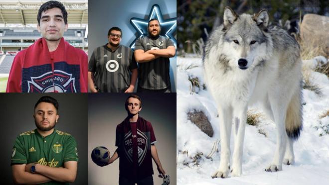 eMLS Cup gamers versus a timber wolf