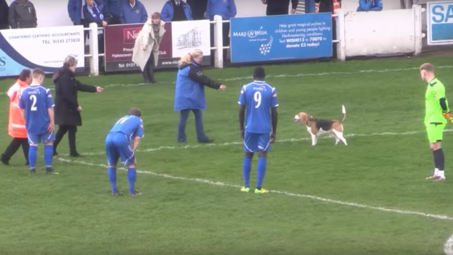 Dog Pitch Invader at Halesowen