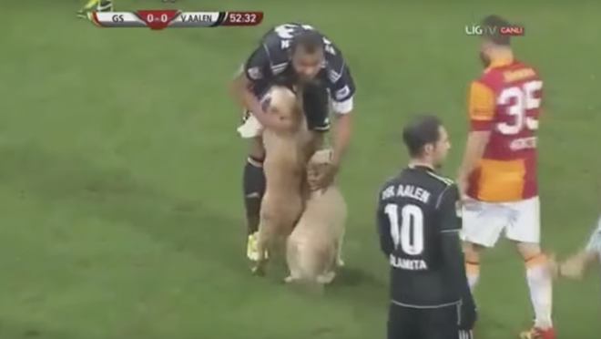 Two Dogs Invade Pitch VfR Aalen Galatasaray
