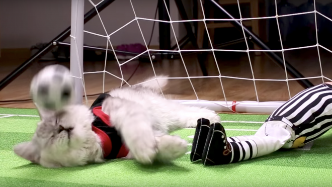 International Cat Day Soccer