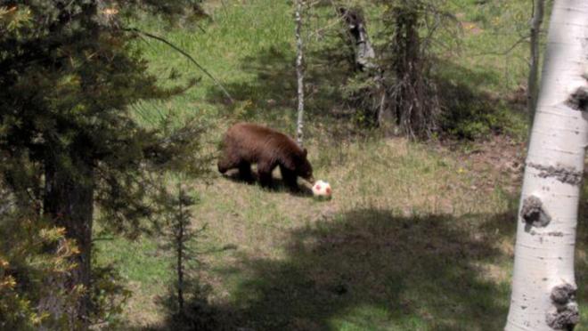 Bear With Soccer Ball