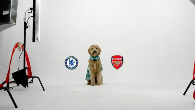 Chewie The Match Predicting Dog North London Derby