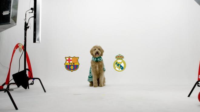 Chewie The Match Predicting Dog El Clasico