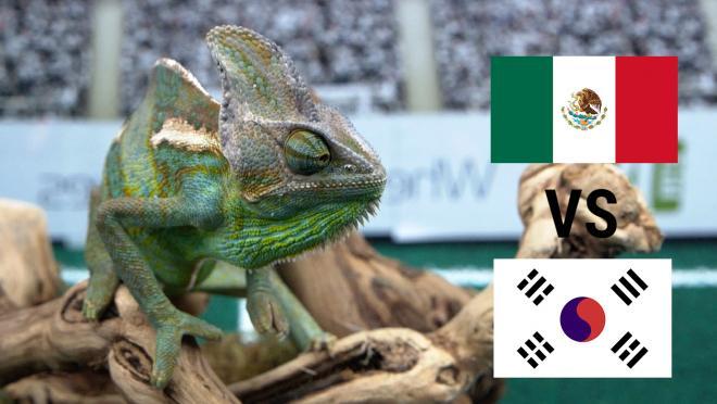 Leon the Chameleon predicts Mexico vs. South Korea