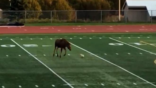 Moose Plays Soccer