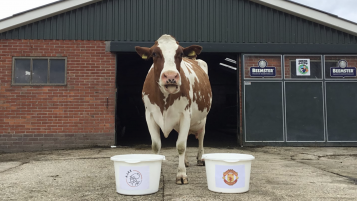 Dutch cow Wkoe Sijtje predicts Ajax to win Europa League